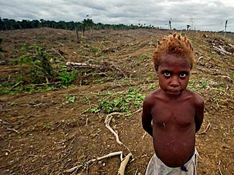 indigenous peoples land rights and redd a case study